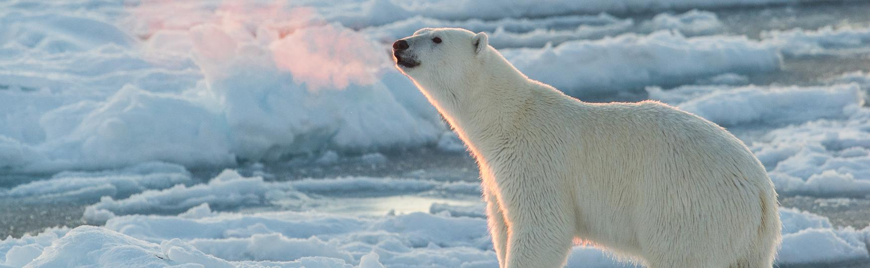 Welcome To The High Arctic Of Svalbard Visit Svalbard