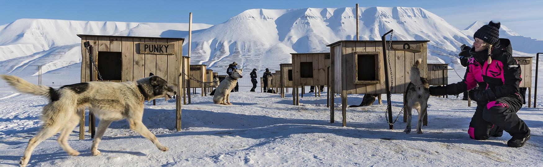 Meet the dogs of Svalbard