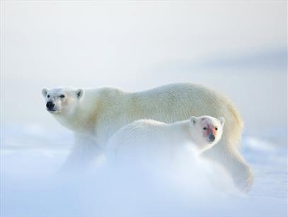 Arctic Wildlife Tours
