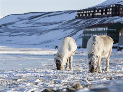 Experience Svalbard and Longyearbyen with a good conscience!