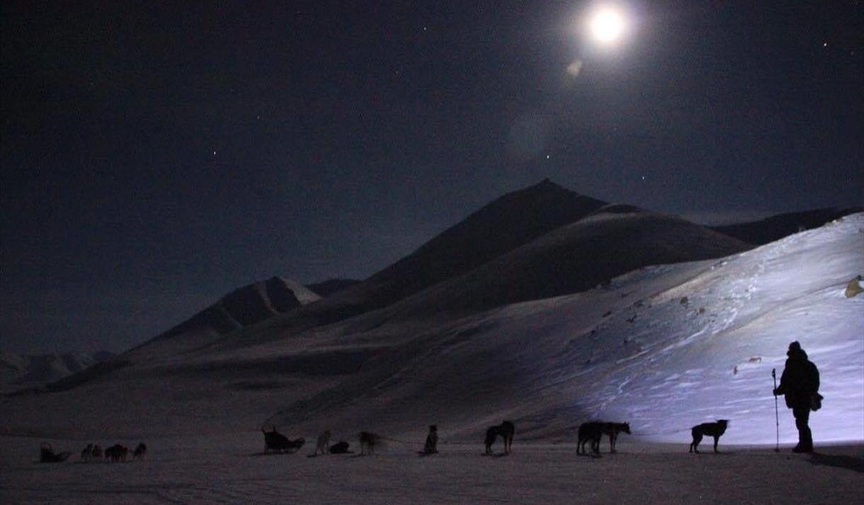 Dog sleds in the polar night