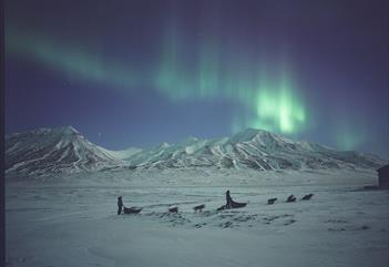 Dog sleds beneath the northern lights