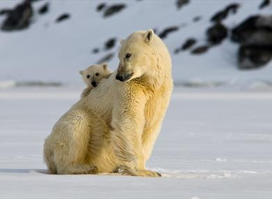 A polar bear with her cub