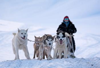 Team of sled-dogs