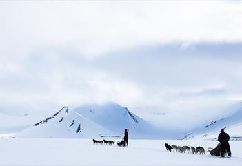 Dogsledtrip, by your own dogteam, in the arctic wilderness. - Svalbard Husky