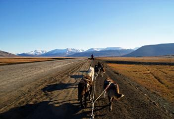 Explore dogsledding on wheels, enjoy lunch and tundra hiking - Arctic Husky Travellers