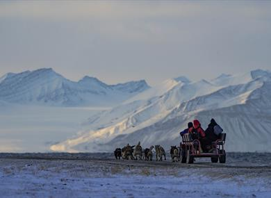 Dog sledding with a cart