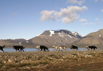Family sightseeing by dog wagon - Svalbard Husky