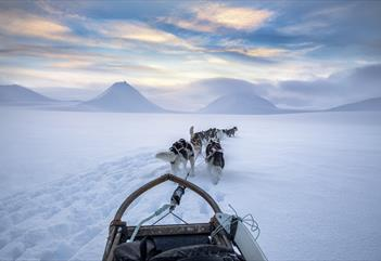 Full Day Dog Sled Expedition - Svalbard Villmarkssenter
