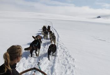Mountain trip with dogsledge, 4 hours - Green Dog Svalbard