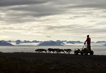 Musher's holiday (dog wagon with lunch stop and walk around the beach) -  Svalbard Villmarkssenter