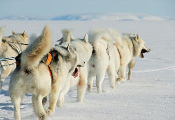 Summer dogsledge to Foxfonna - Green Dog Svalbard